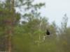 Orre-Fljoten-2017-05-20-0027
