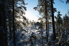 Oxberg vinter